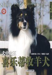 犬中女王——喜乐蒂牧羊犬