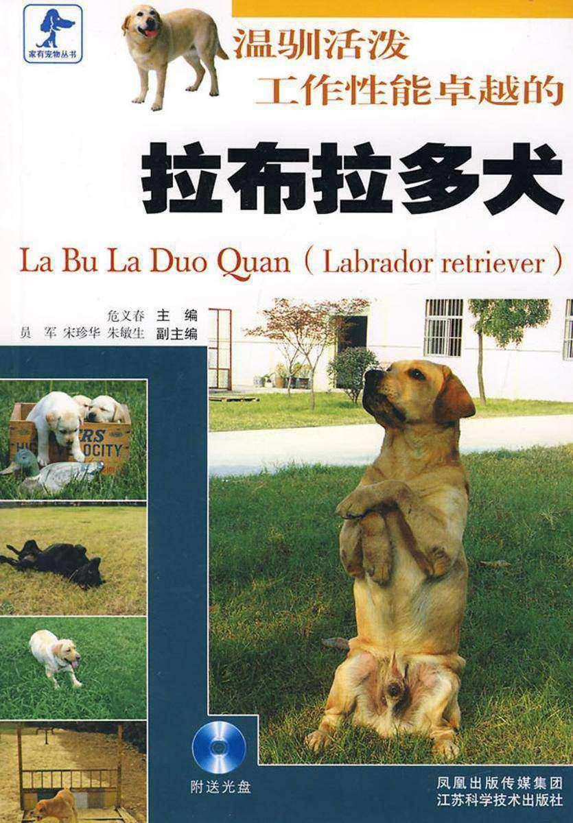 温驯活泼工作性能卓越的拉布拉多犬