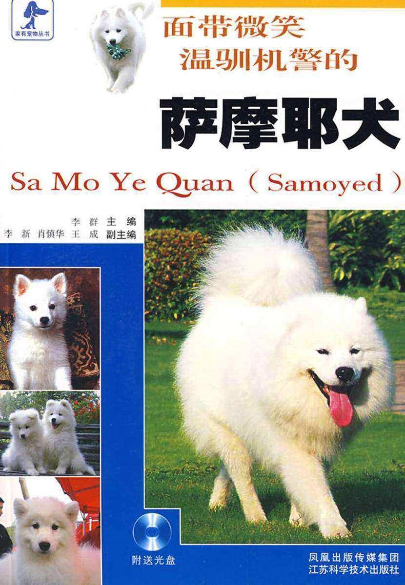 面带微笑温驯机警的萨摩耶犬