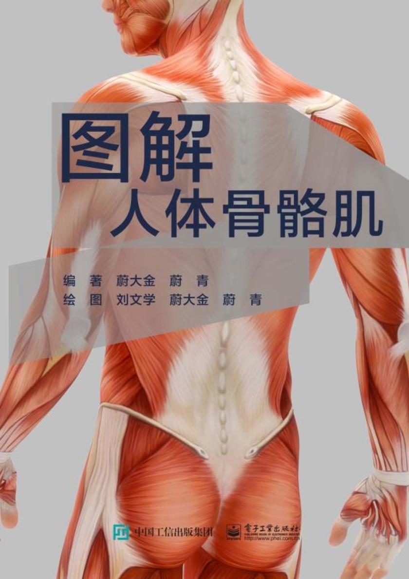 图解人体骨骼肌