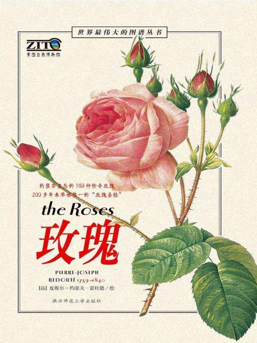 玫瑰(仅适用PC阅读)