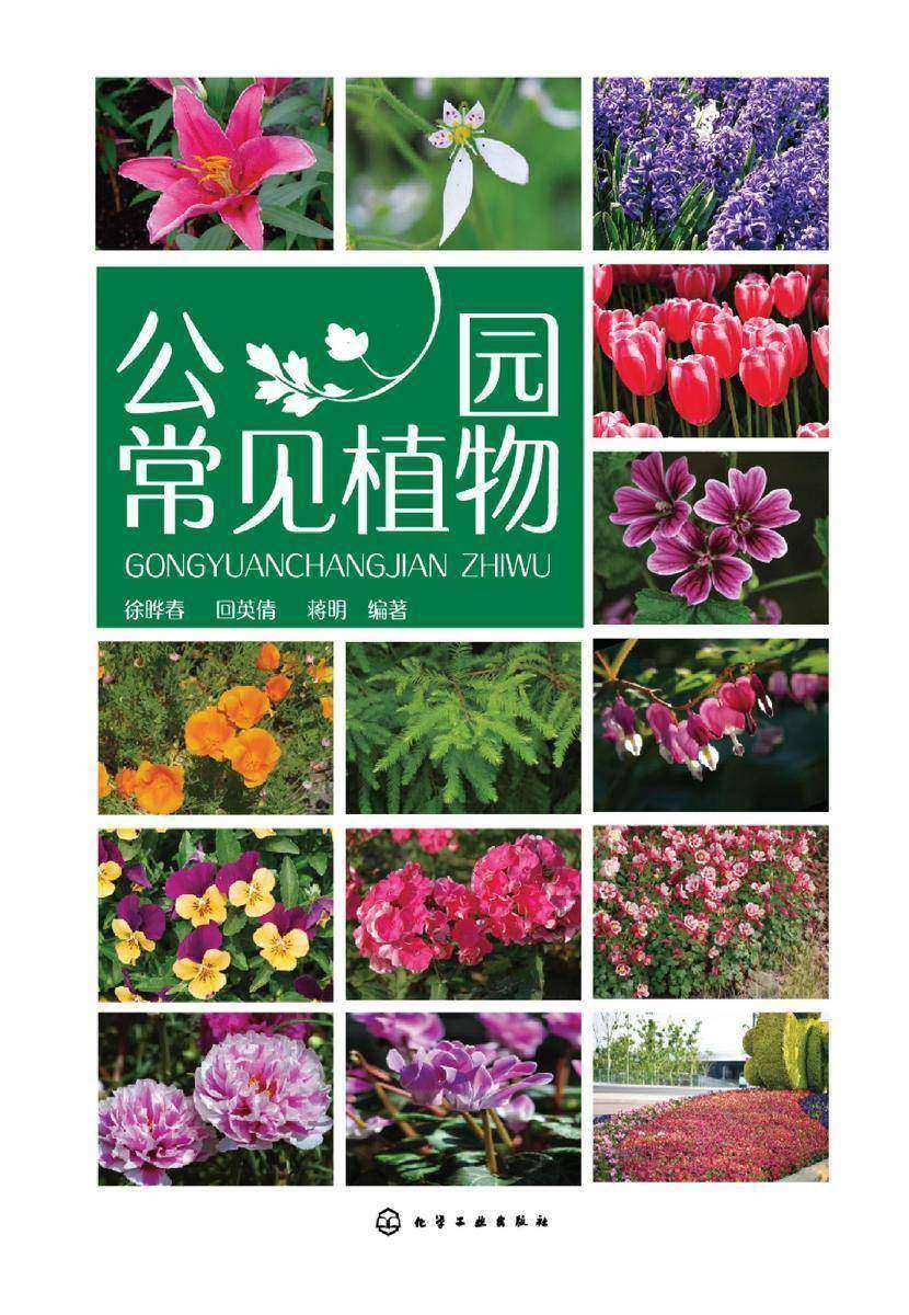 公园常见植物