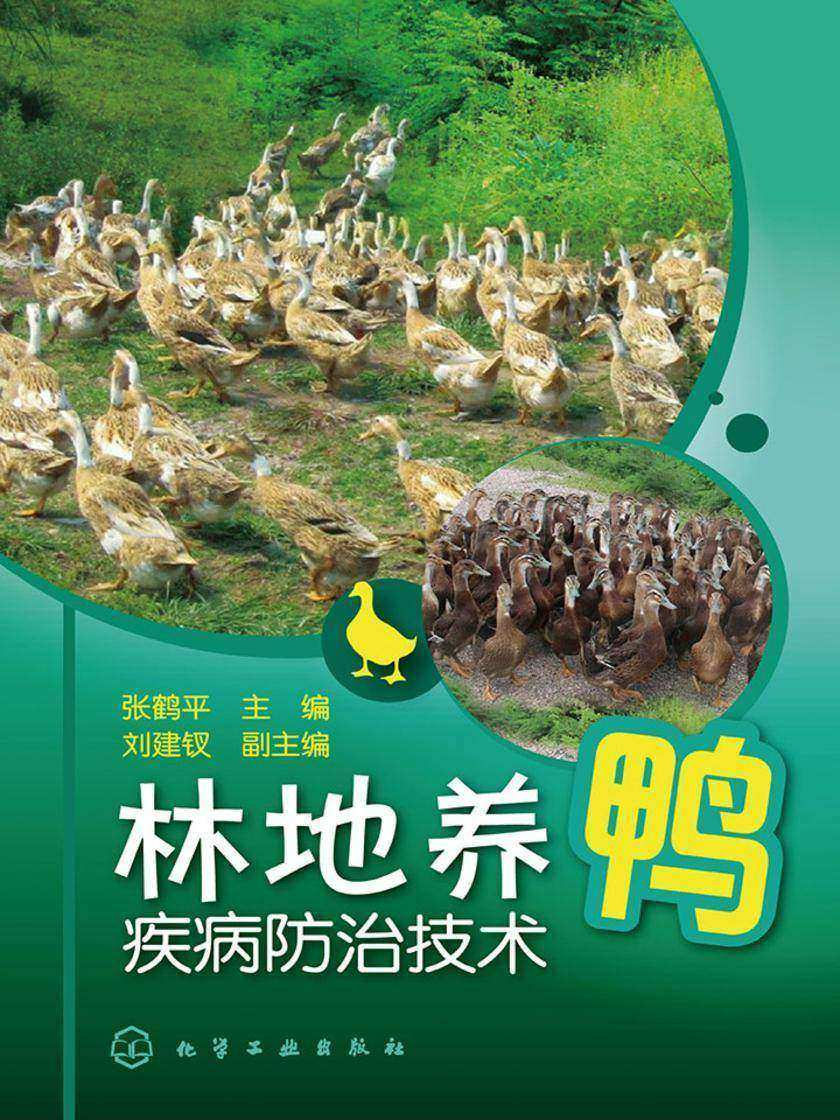 林地养鸭疾病防治技术