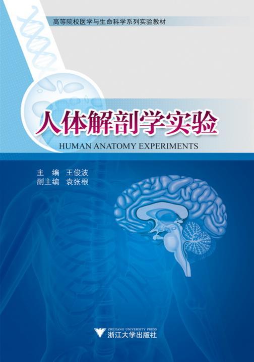 人体解剖学实验