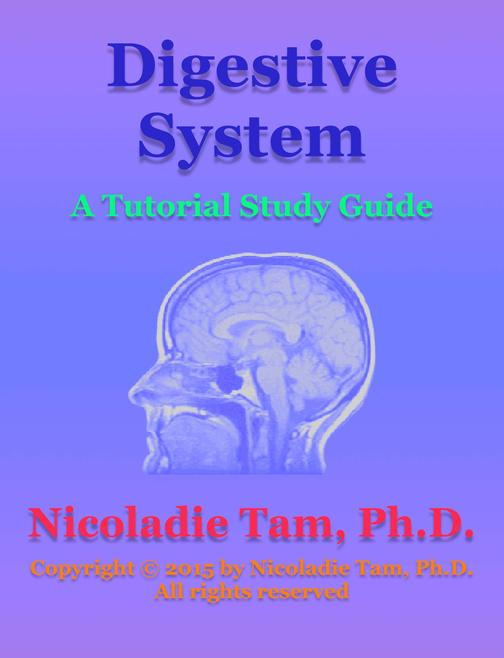 Digestive System: A Tutorial Study Guide