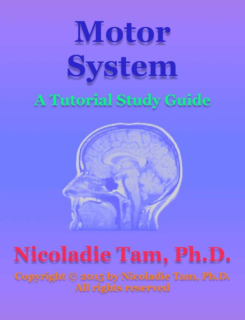 Motor System: A Tutorial Study Guide