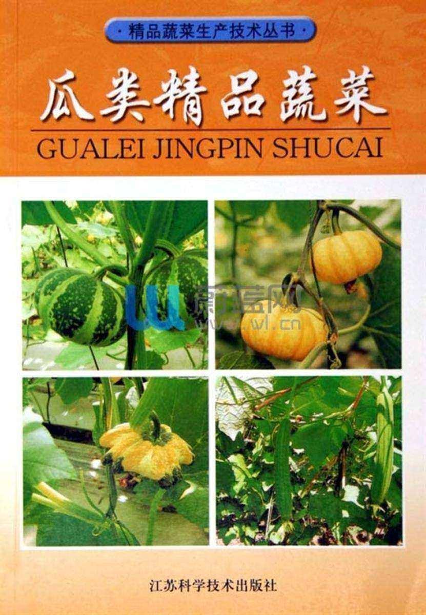 瓜类精品蔬菜