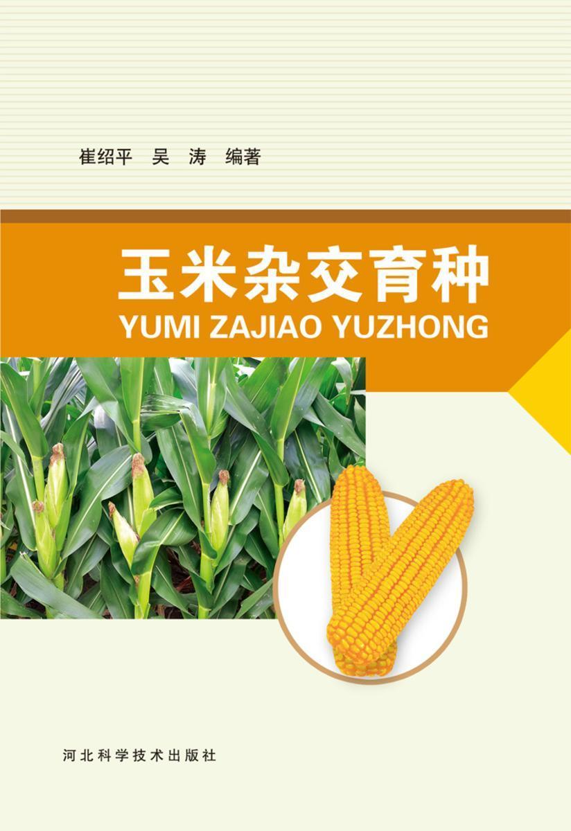 玉米杂交育种