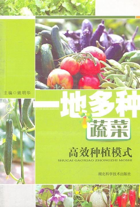 一地多种蔬菜高效种植模式