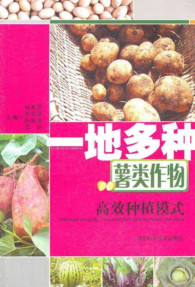 一地多种薯类作物高效种植模式