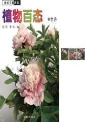 植物百态·牡丹(仅适用PC阅读)