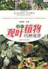 流行观叶植物巧种易养