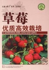 草莓优质高效栽培