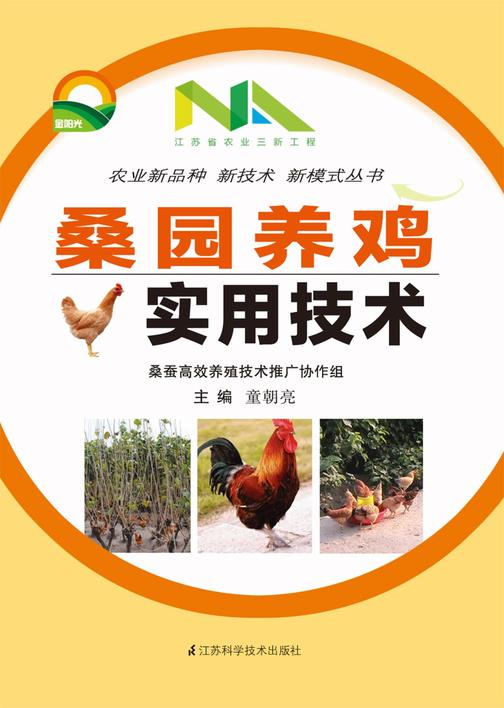 桑园养鸡培训实用技术