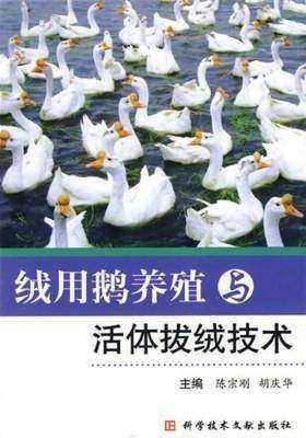 绒用鹅养殖与活体拔绒技术